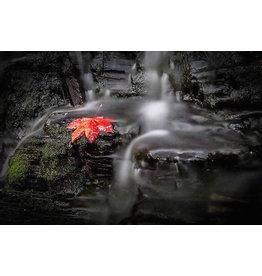 Frank Lynn Pierce Red Leaf
