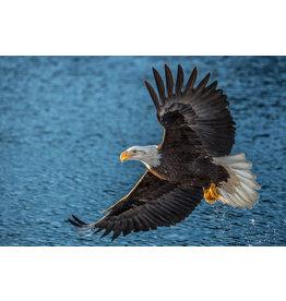 Frank Lynn Pierce Bald Eagle I