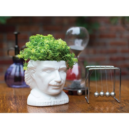 The Unemployed Philosophers Guild Albert Einstein Planter