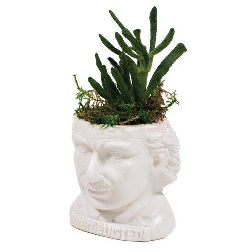 The Unemployed Philosophers Guild Albert Einstein Planter
