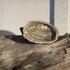 Abalone Shells SM