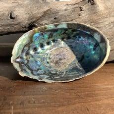 * Abalone Shell