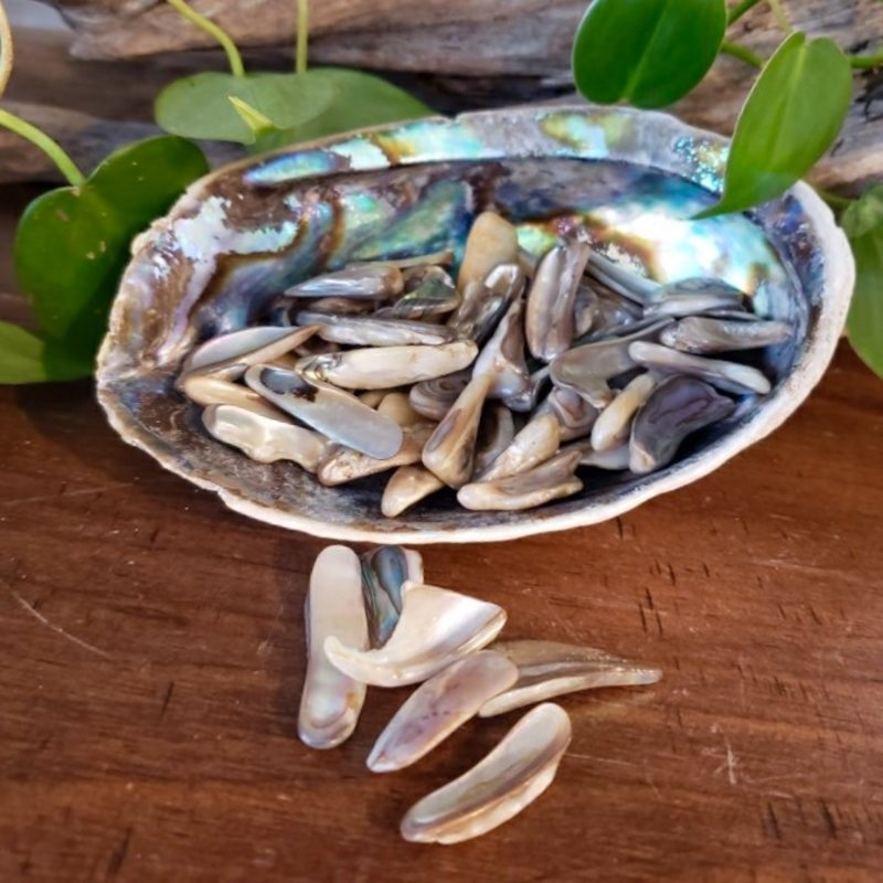 Abalone Shell Tumbled