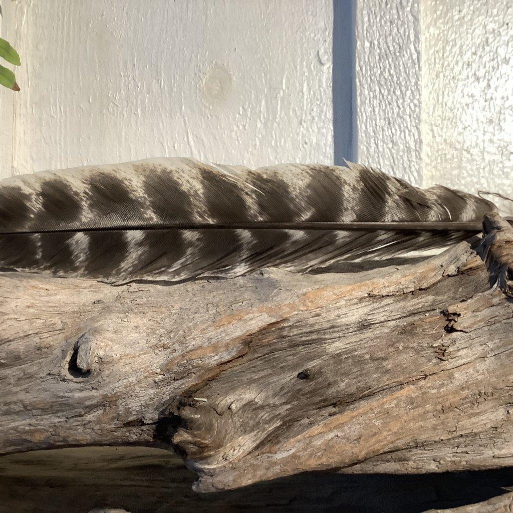 Turkey Feather