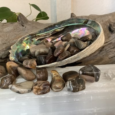 Petrified Wood Tumbled