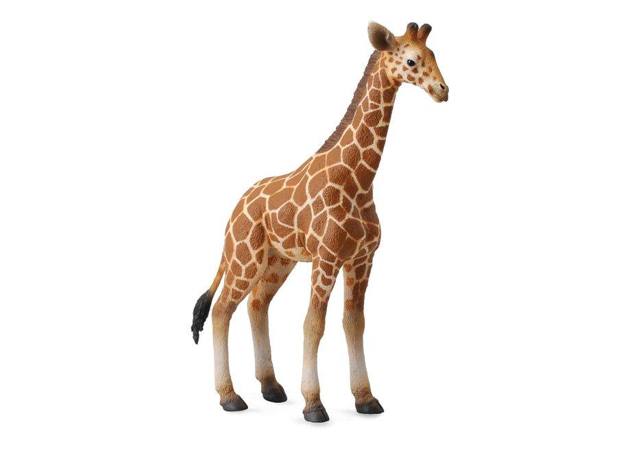 Collecta Reticulated Giraffe Calf