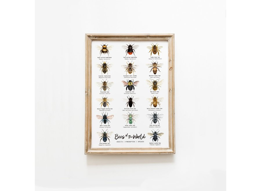 Bees of the World - A3 Poster