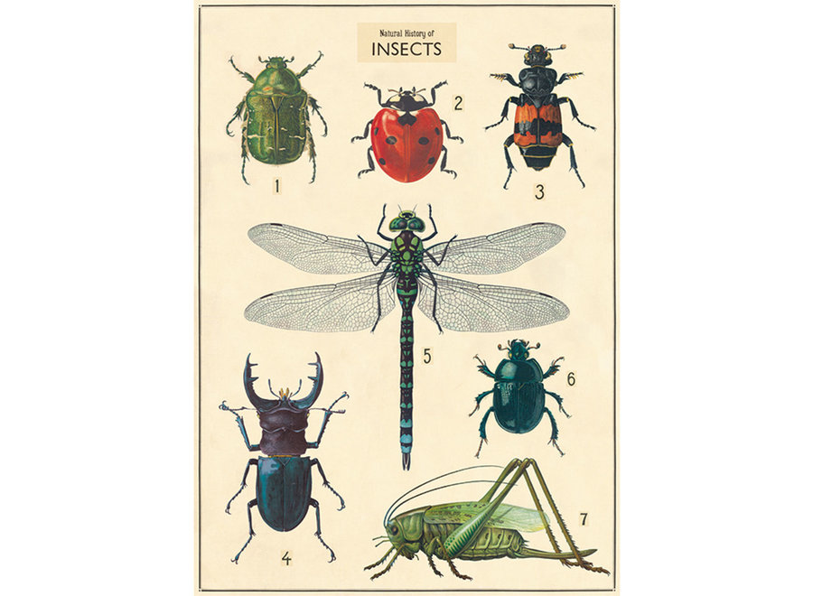 Cavallini Poster/Gift Wrap – Insects