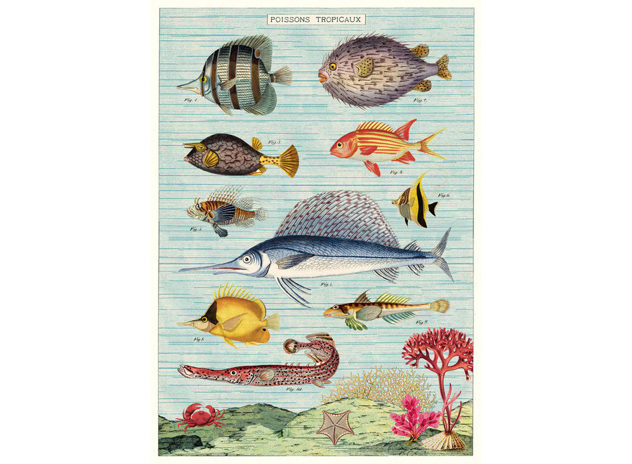 Cavallini Poster/Wrap – Tropical Fish