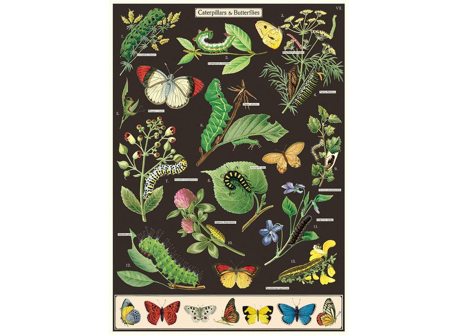 Cavallini Poster/Gift Wrap – Caterpillars