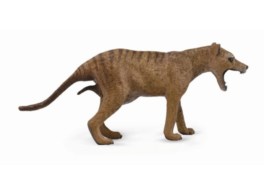 Thylacine (Tasmanian Tiger)-Female