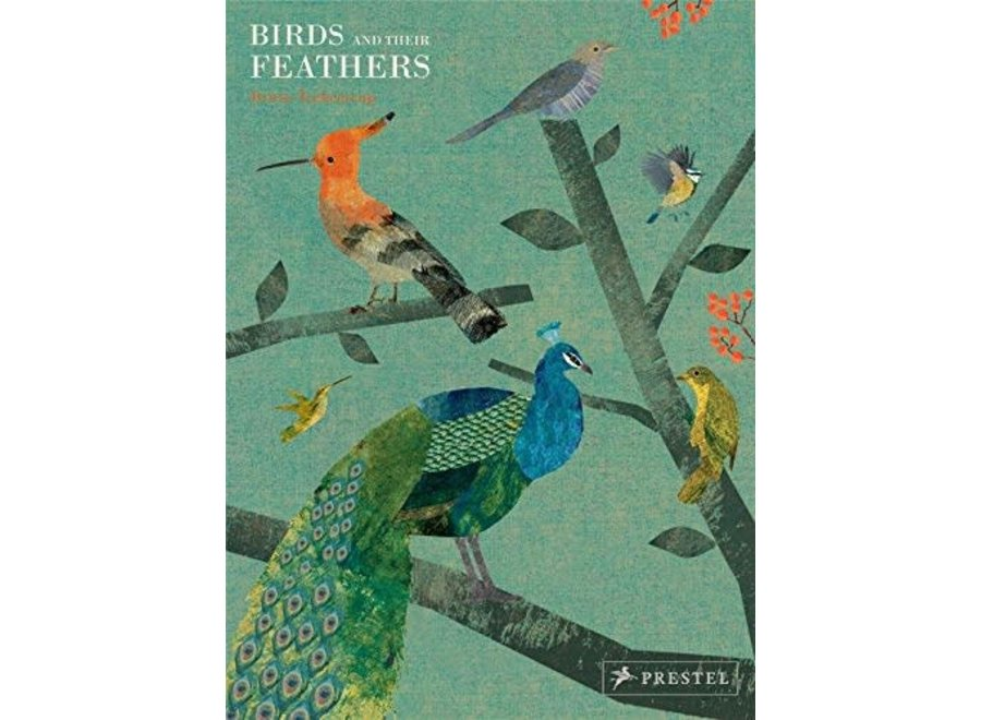 Bird and Their Feathers