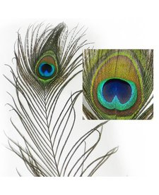 Imperial Cat Peacock Feather