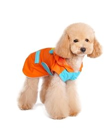Dogo XS Monster Orange Raincoat