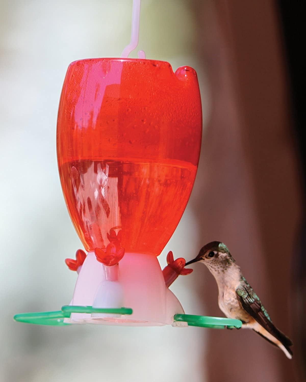 Audubon Add Water HB Feeder