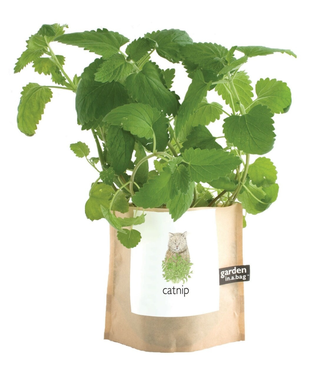 Potting Shed Creations Garden in a Bag Catnip Grow Kit