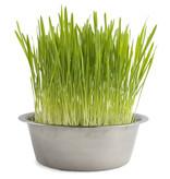 Potting Shed Creations Cat Grass Pet Bowl Grow Kit