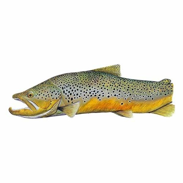 Sawyer Paddle & Oars Artisan Square Top Brown Trout Oars