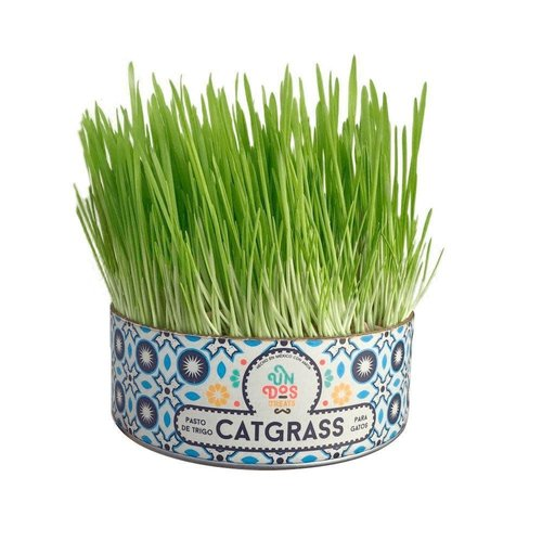 Un Dos Treats Cat Grass - Pasto de Trigo para Gatos