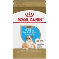 Canine BHN Bulldog Puppy 2.72 kg
