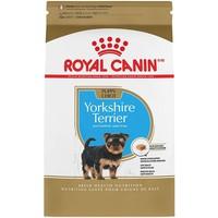 Canine BHN Yorkshire Terrier Puppy 1.13 Kg