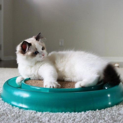 Bergan Juguete Starchaser Cat Toy