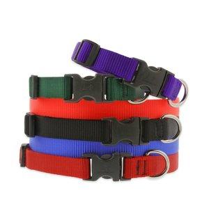 Lupine Pet Collar Basic Solid