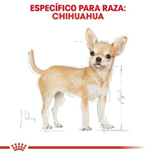 Royal Canin Canine Chihuahua Adulto