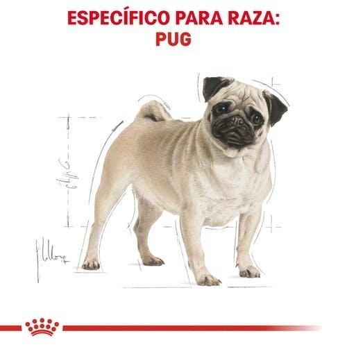 Royal Canin Canine BHN Pug Adulto 4.54 kg