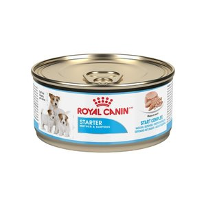 Royal Canin Canine Lata Starter Mousse 165 g