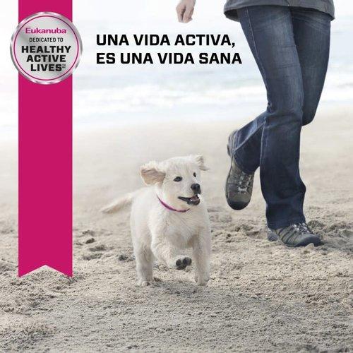 Eukanuba Canine Puppy Razas Mediana (MB)