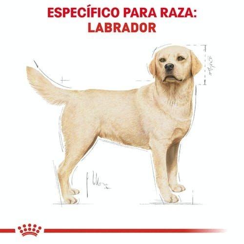 Royal Canin Canine BHN Labrador Retriever Adulto 13.63 kg