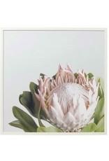 Amalfi Timber Framed  Protea Canvas 2 Designs