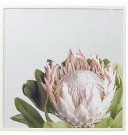 Amalfi Timber Framed  Protea Canvas 2 Designs
