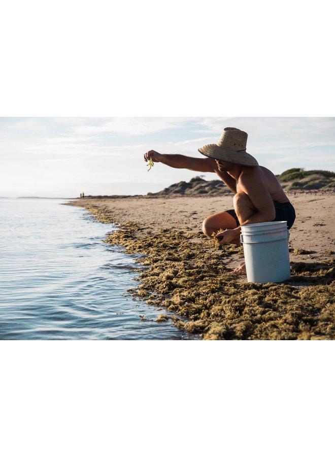 All-Natural Agua Verde Soap