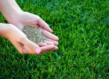 Grass Seed & Fertilizers