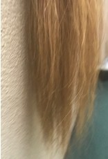 Chestnut Pony Tail Extension
