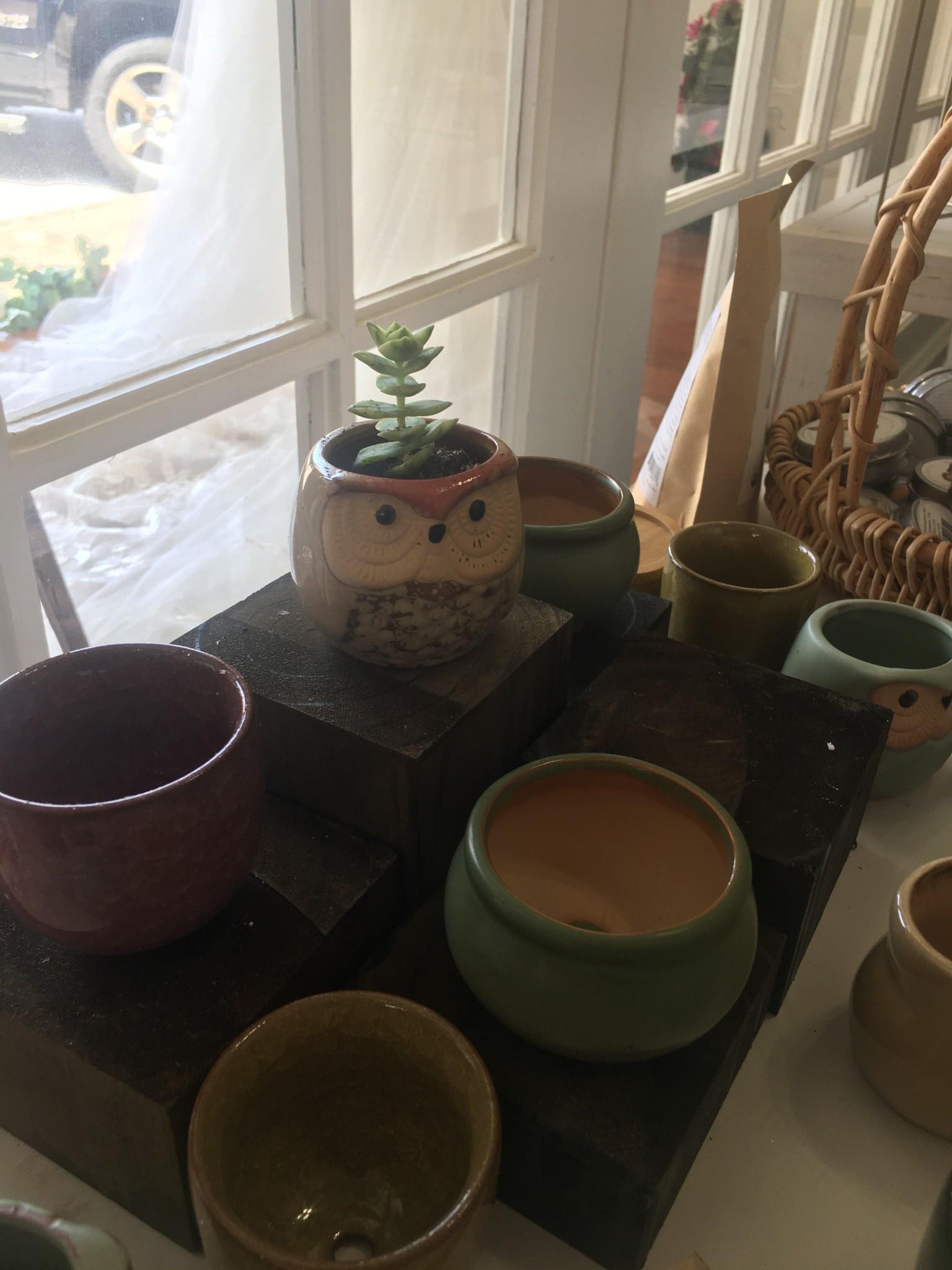 Summer Make & Take-Succulent Planter