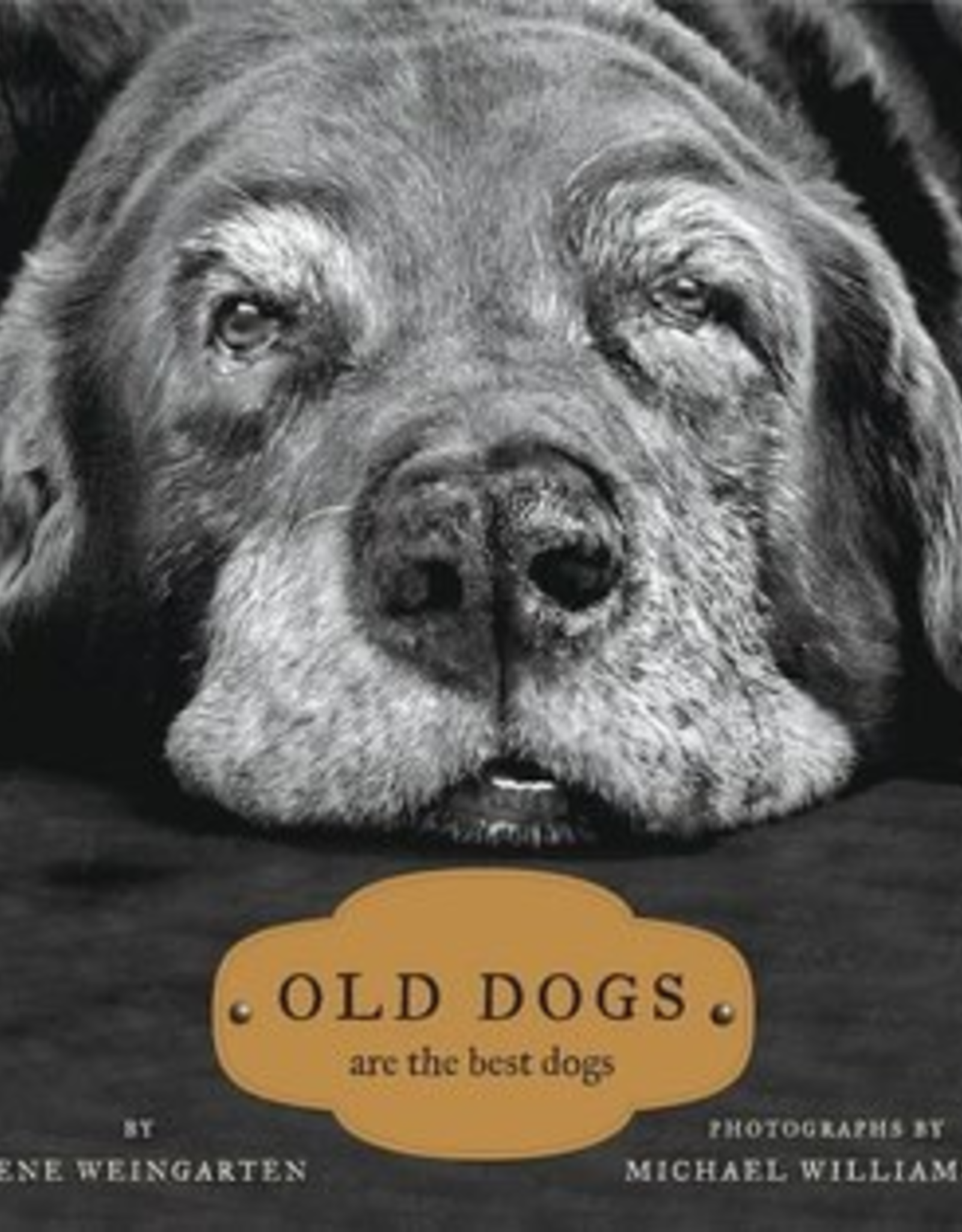 Common Grounds Old Dogs Are The Best