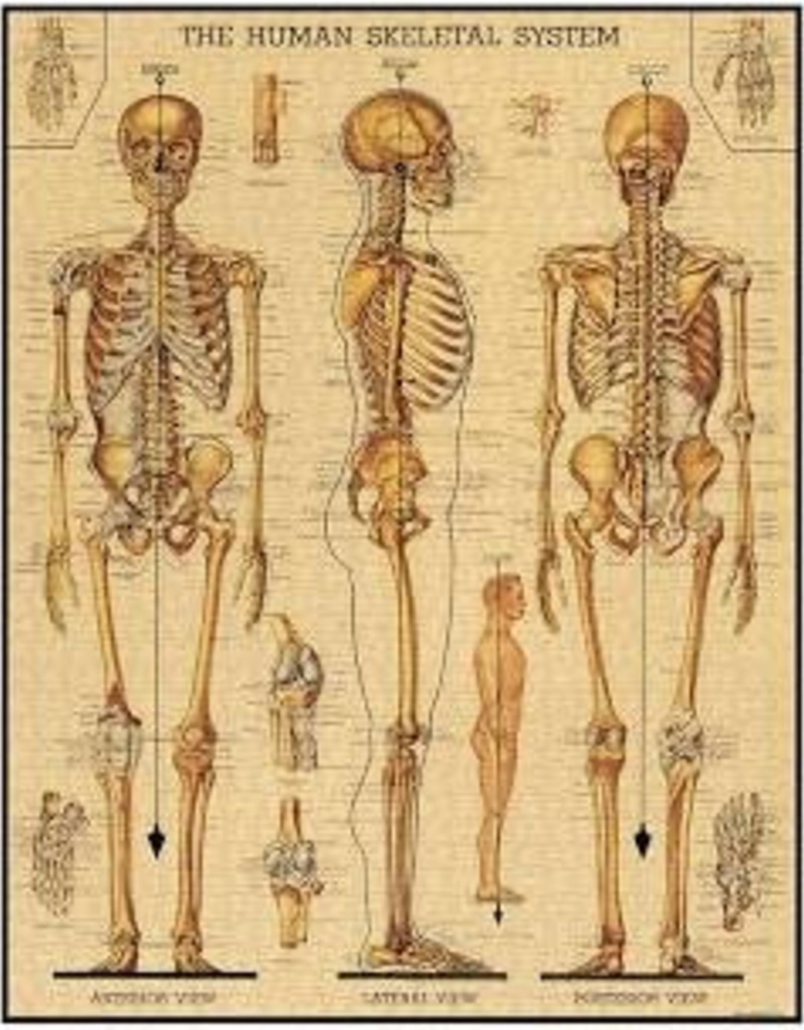 CAV Skeletal System 1000 Piece Puzzle