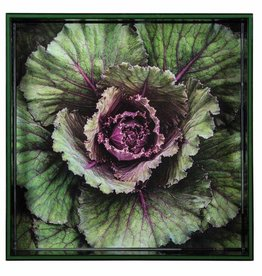 "RockFlowerPaper Cabbage 15"" Square Tray"