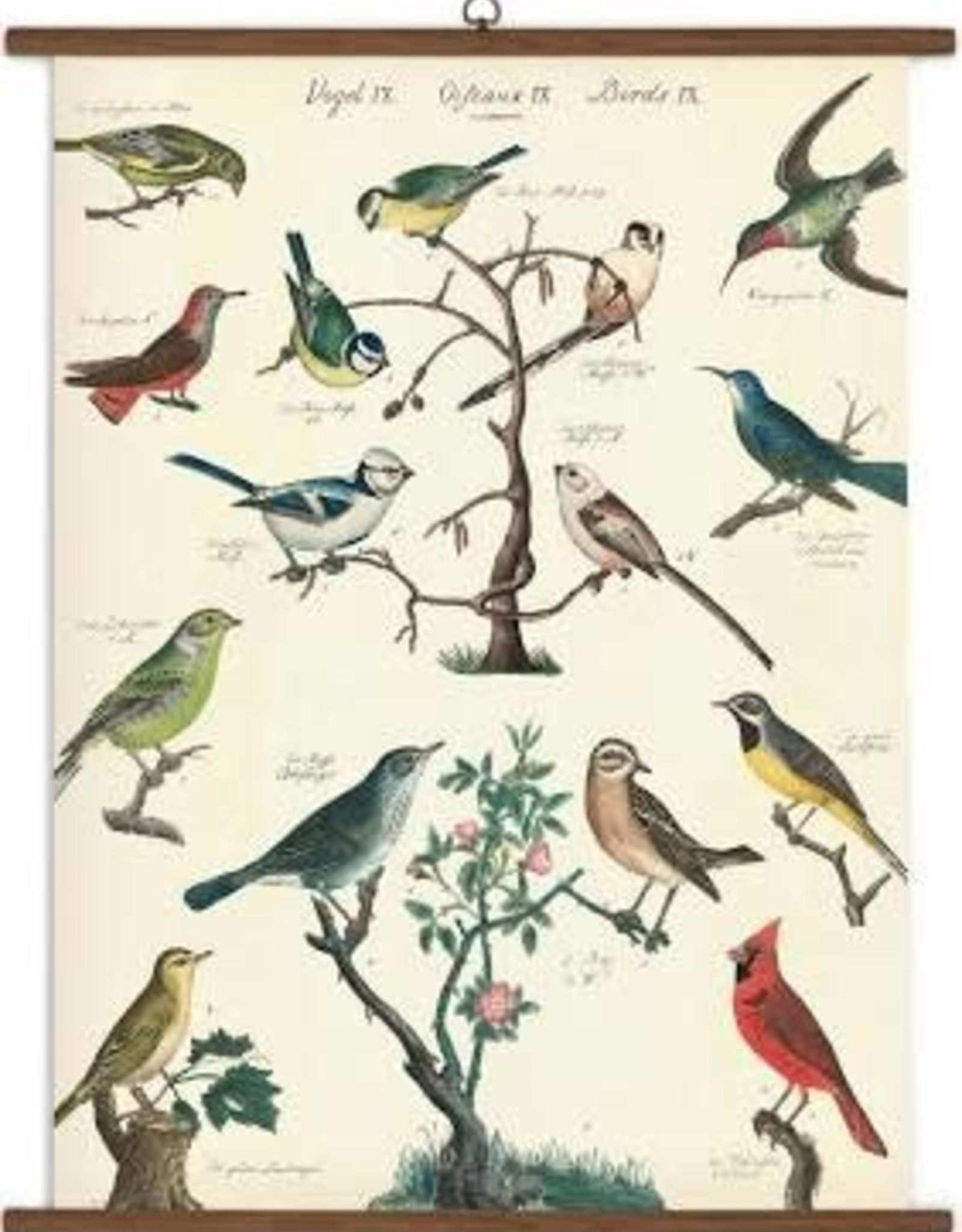 Cavallini Birds 1000 Piece Puzzle
