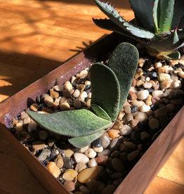 Curio Rust Metal Planter with 3 arid plants
