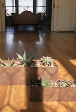 Curio Rust Metal planter with Bromeliad & Haworthia