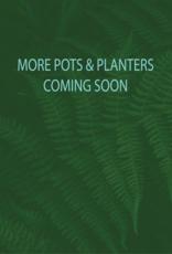 Curio More Pots & Planters Coming Soon