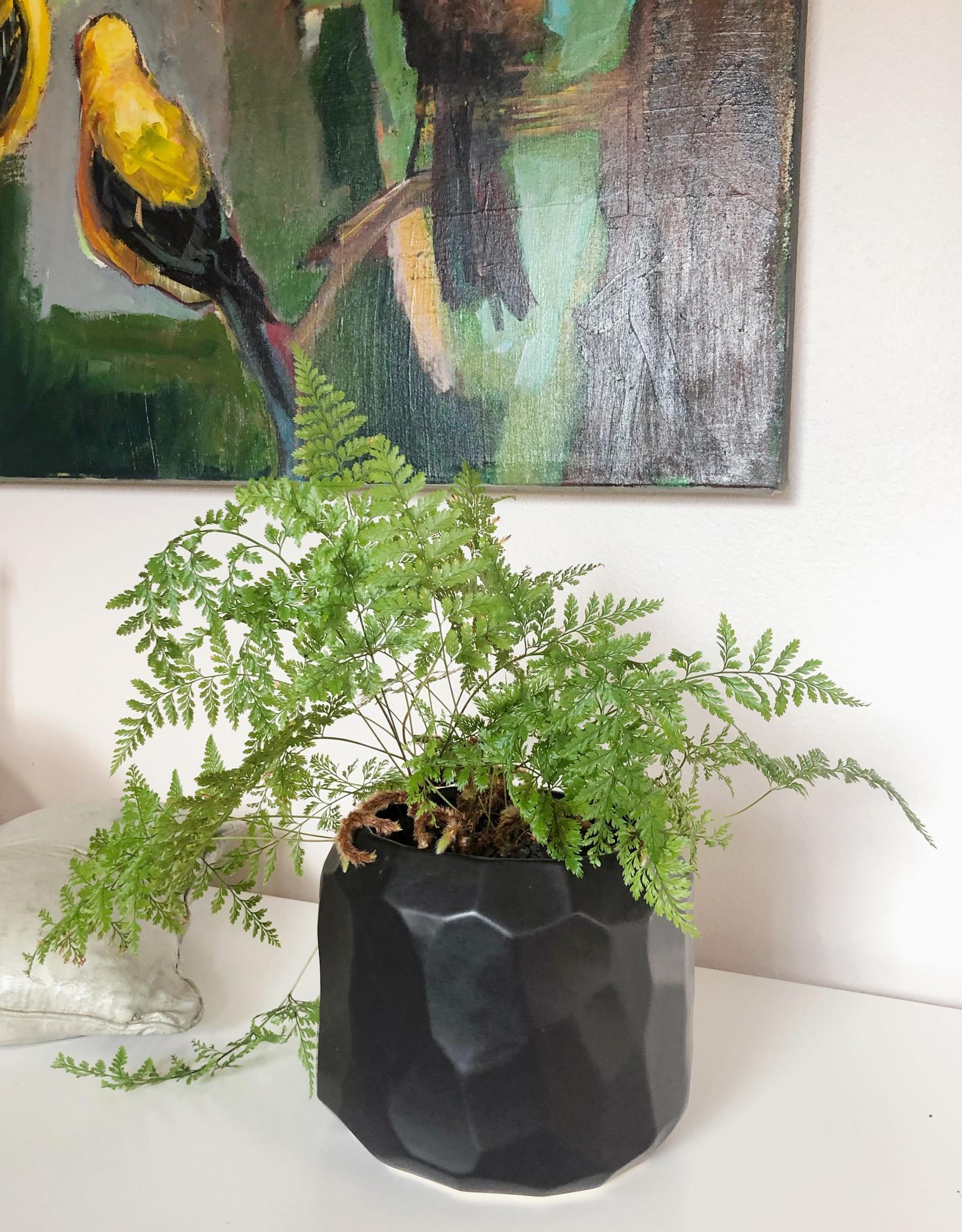 Curio Faceted Plant Pot, Matte Black
