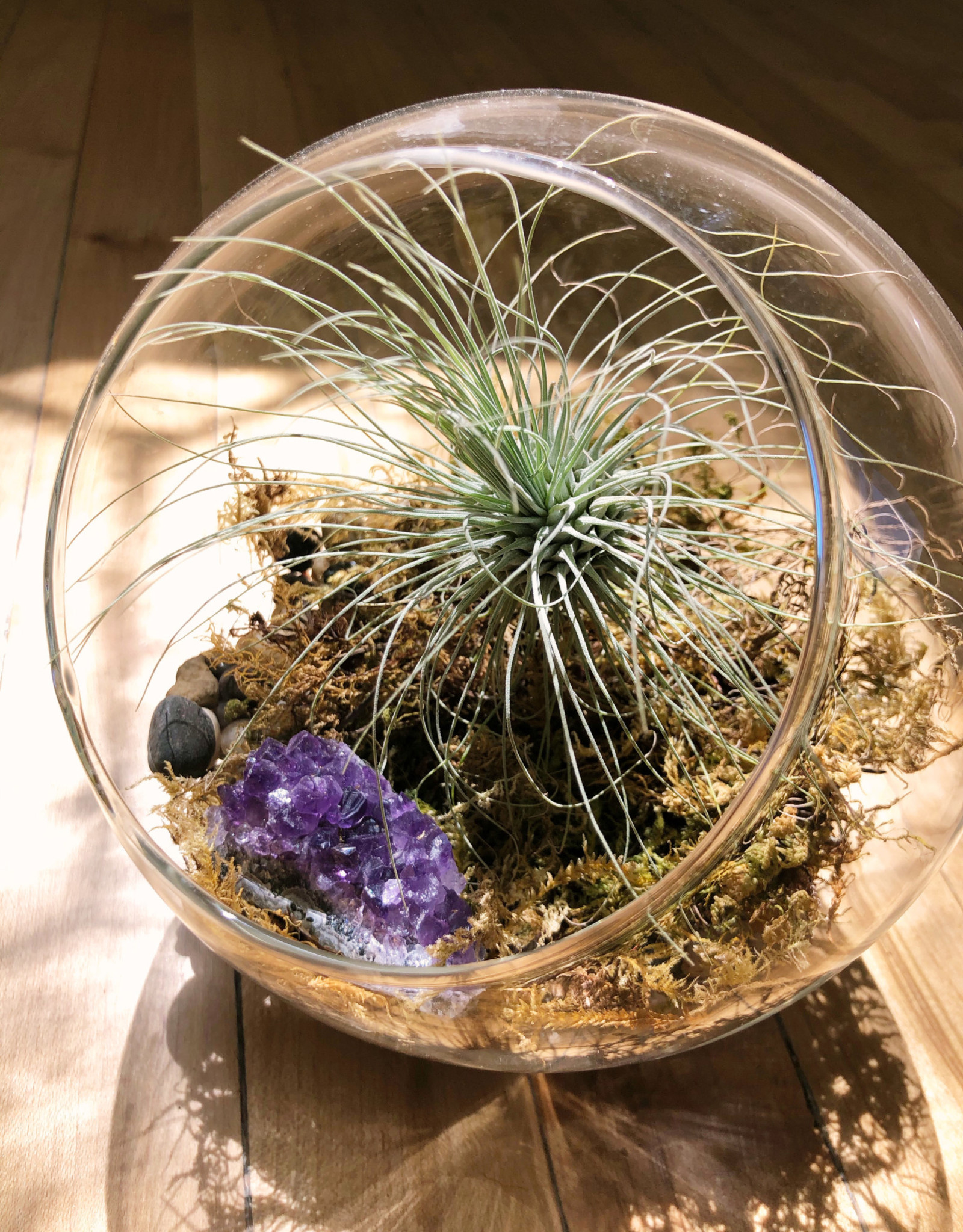 Curio Glass Orb terrarium with amathyst and Tillandsia