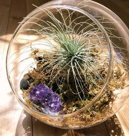 Curio Glass Orb terrarium