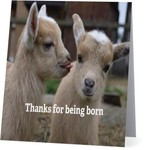 Bad Annie's Card #013 - Thanks For Being Born, Goats