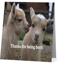 Card #013 - Thanks For Being Born, Goats